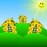 Three bright at home  with yellow sunflowers on a green lawn Stock Photo