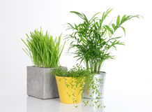 Three bright plants in pots Stock Photo