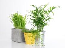 Three bright plants in pots Stock Photo