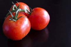 Three bright red fresh tomatoes on a green twig Stock Images