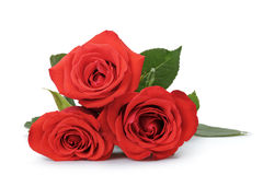 Three bright red roses  on white Royalty Free Stock Images