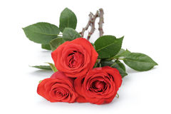 Three bright red roses  on white Royalty Free Stock Image
