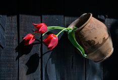 Red tulips in ancient clay pot. Three bright red tulips in an old clay pot, photographed in direct sunlight royalty free stock photography