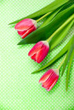 Three bright red tulips on a patterned green background. Royalty Free Stock Photo