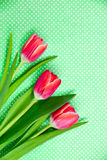 Three bright red tulips on a patterned green background. Stock Images