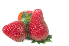 Three bright ripe strawberries from the garden with green leaves Royalty Free Stock Photo