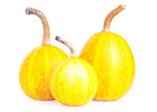 Three bright small decorative pumpkins Stock Photography