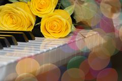 Three bright yellow roses lie on the piano keyboard.  royalty free stock image