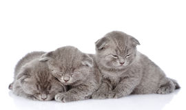 Three british shorthair kittens sleeping. isolated on white.  Royalty Free Stock Photography