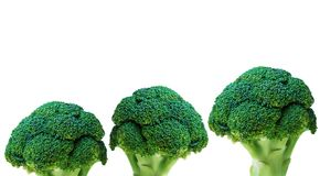 Three Broccoli isolated on white background. Fresh ripe vegetables, vitamins Royalty Free Stock Photography