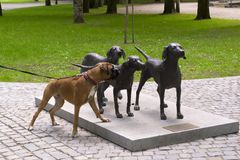 Three bronze dogs with a live one Royalty Free Stock Image