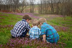 Three brothers sit in a flower field Royalty Free Stock Image