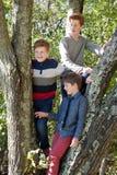 Three brothers on a tree Stock Photo