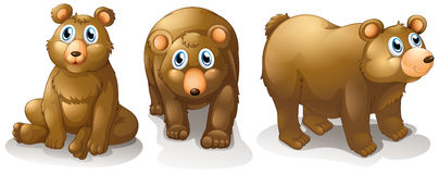 Three brown bears. Illustration of the three brown bears on a white background Stock Photos