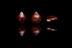 Three brown chestnuts isolated on black background Royalty Free Stock Photos