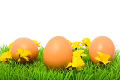 Three brown chicken eggs on grass Stock Photography