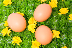 Three brown chicken eggs on grass Royalty Free Stock Photography