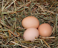 Three Brown Chicken Eggs in Hay Royalty Free Stock Photos