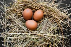 Three Brown Chicken Eggs in Hay Nest royalty free stock photos