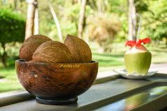Three brown coconuts on the wooden plate. At the tropical bar at Maldives Royalty Free Stock Photo