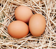 Three brown eggs Stock Photography