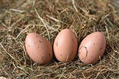 Three brown eggs with black dots are lying on the hay royalty free stock photos