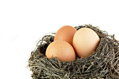 Three Brown Eggs in a Nest. Three brown eggs in  nest on a white background Royalty Free Stock Photos