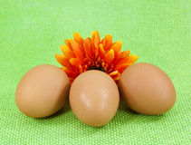 Three brown eggs with orange flower. On green background grid Stock Photography