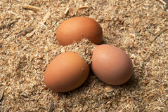 Three brown eggs on sawdust Stock Photo