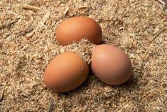 Three brown eggs on sawdust Stock Photo