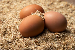 Three brown eggs on sawdust Royalty Free Stock Photo