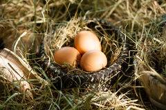 Three brown eggs in straw nest Stock Images