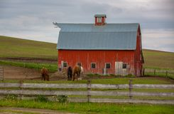 Horses grazing behind the fence on a farm stock photo