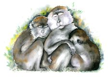 Monkey family. Three brown monkies sitting together with closed eyes. Watercolor illustration. stock illustration