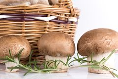 Three brown mushroom basket and rosemary Royalty Free Stock Image