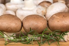 Three brown mushroom in the foreground Royalty Free Stock Photo