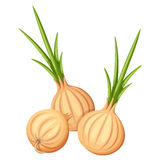 Three brown onions. Vector illustration. Royalty Free Stock Photography
