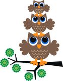 Three brown owls Stock Photos