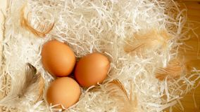 Three brown hen eggs and chicken feather on white shredded paper in wooden basket, top view photo stock photography