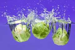 Three Brussels sprouts falling in water Royalty Free Stock Images