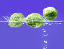 Three Brussels sprouts falling in water Royalty Free Stock Photo