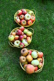 Three Buckets filled with fresh Apples Outside on Grass Stock Photos