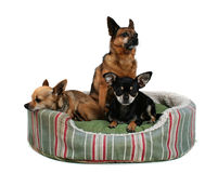 Three buddies Stock Images