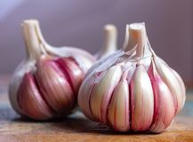 Three bulbs of fresh violet French garlic close up royalty free stock photography