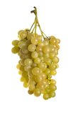 Three bunches of grape Royalty Free Stock Photo