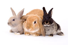Three bunny Royalty Free Stock Photo