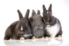 Three bunny Stock Photo