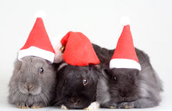 Three Bunny In Santa Hat Stock Images
