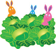 Three bunny rabbits in a cabbage patch. Three colorful cartoon bunny rabbits hiding in a field full of cabbages Stock Photography