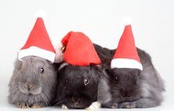Three bunny in santa hat stock images